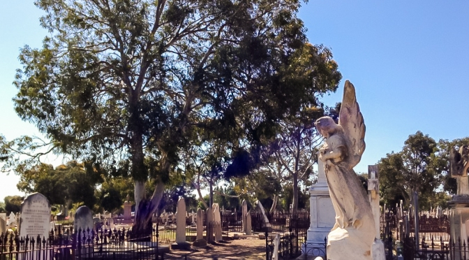 West Terrace Cemetery: a poetic experience