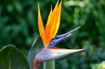 Adelaide Zoo - 063