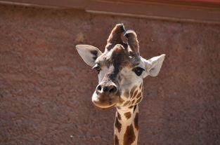 Adelaide Zoo - 121