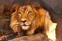 Adelaide Zoo - 199