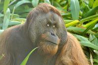 Adelaide Zoo - 252