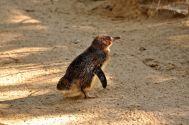 Adelaide Zoo - 264