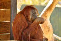 Adelaide Zoo - 265