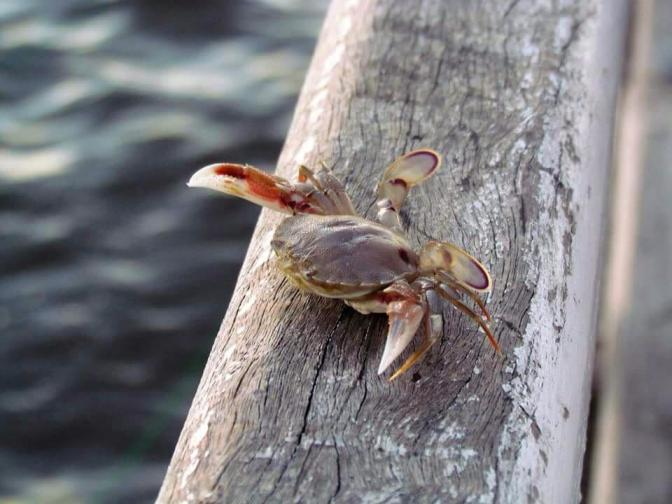 Let's go crabbing!!!!
